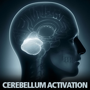 Cerebellum Activation