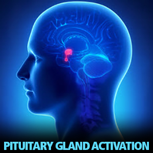 Pituitary Gland Activation